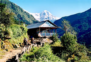 Tea-house Trekking